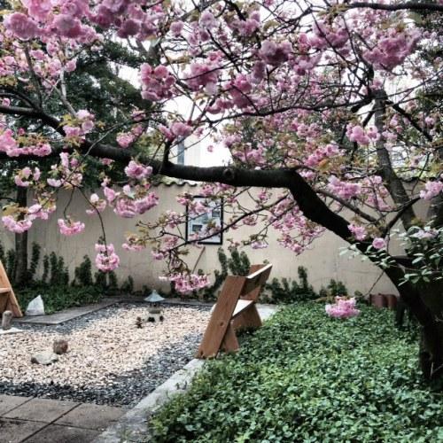 Zen Garden at Vanderbilt